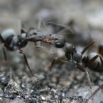 蟻の巣退治や駆除の方法は?
