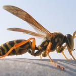 蜂に刺されたら薬は?医者は何科に行けばいいの?