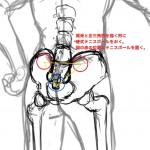 腰痛改善のポイントは仙腸関節にある?