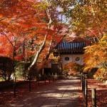 京都で紅葉の穴場はここだ!